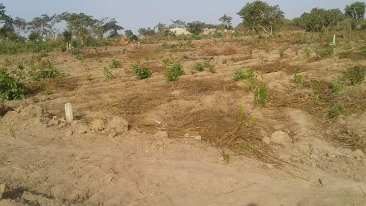 Vende se Terrenos de 40 talhões entrada cassama bloco
